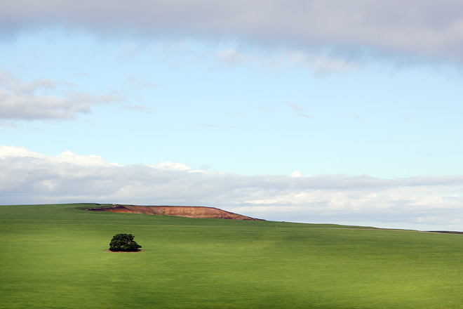 Tree on a plain hill