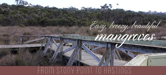 Easy, breezy, beautiful mangroves