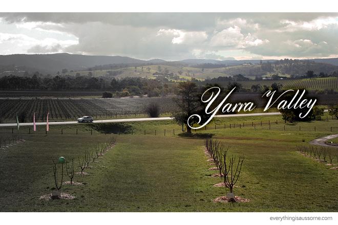 Yarra Valley: Wine, Cheese, Chocolate & Joey