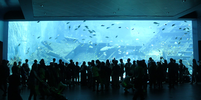 Aquarium with sunken ship