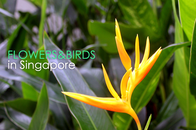 Flowers & Birds in Singapore