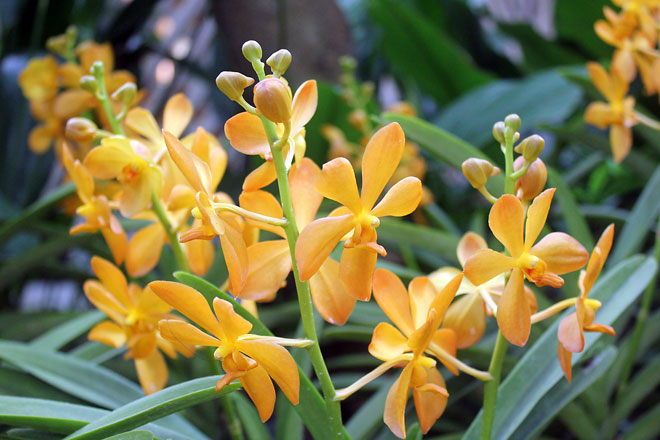 Orchids from Singapore Botanic Gardens