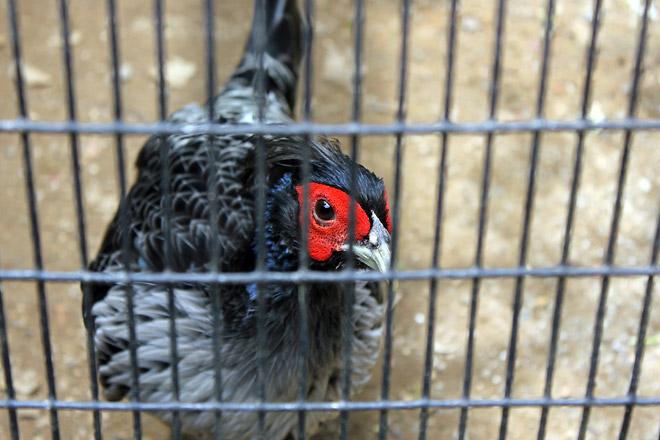 Bird from Jurong Bird Park