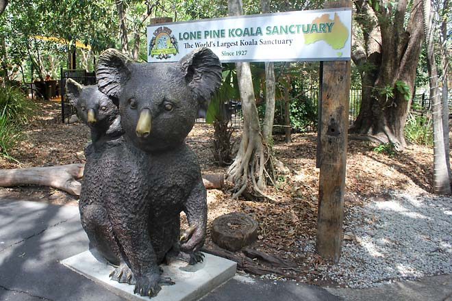 Lone Pine Koala Sanctuary, statues of koalas