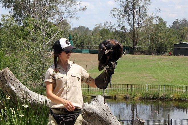 Bird show at Lone Pine Sanctuary