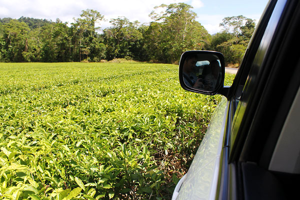 No boundaries. We drive right up to the tea farm.