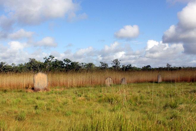 Termite mounds among grassy land.