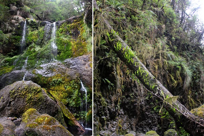 Canyon Falls, a hike from our accommodation, Lemonthyme Lodge.