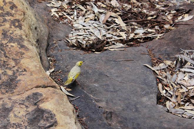 Pretty yellow bird.