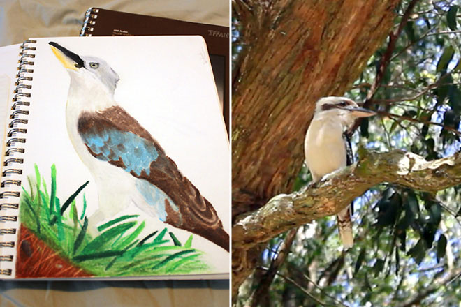sketch-kookaburra