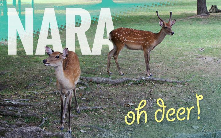 Nara, oh deer!