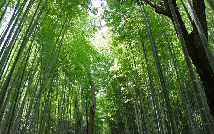 arashiyama03