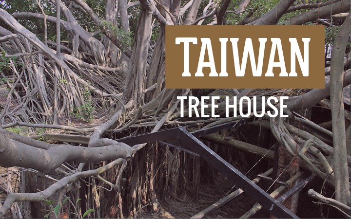 What a Tree House looks like in Taiwan