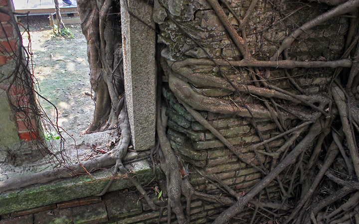 Tree roots wrapped under and between window frames.