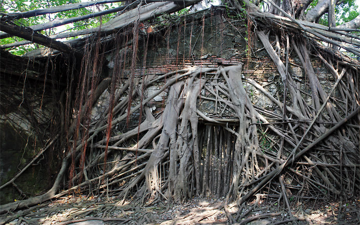 Anping Tree House, Taiwan. Roots take over a facade of the house.