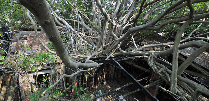 Anping Tree House, Taiwan. Massive roots growing out from the top.