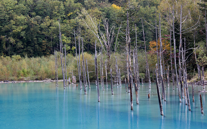 Blue Pond, Biei, with tree stumps sticking out