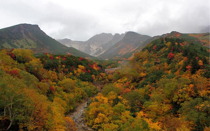 Hokkaido autumn colours - specks of red, yellows, greenish yellows