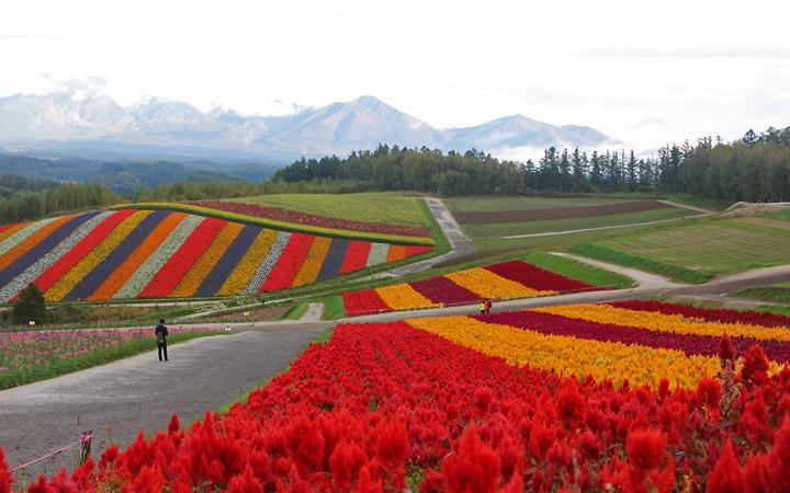 Shikisai-no-Oka, Garden of reds, oranges, purples, whites and yellows.