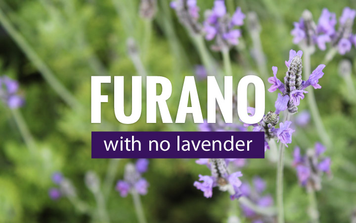 Furano, post-lavender season