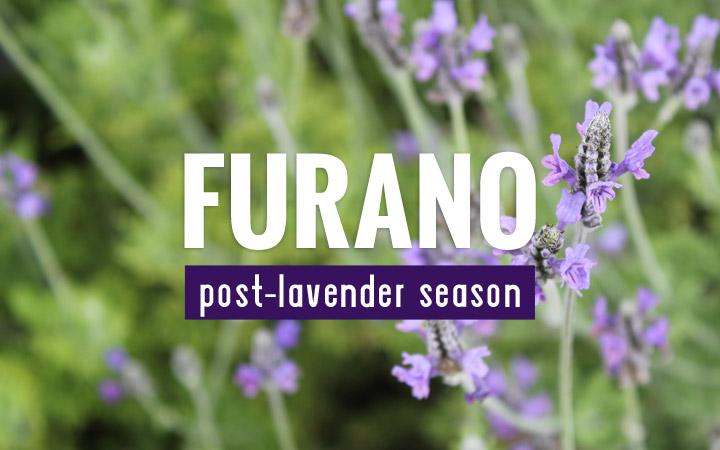 Furano, post-lavender season